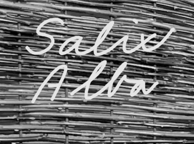 SalixAlba