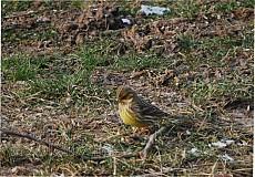 Fotografie - Jarné vtáča - 3749808_