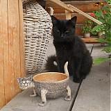 Pre zvieratá - Miska pro kočku - 3774205_