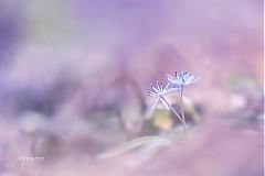 Fotografie - ...nežnosti... - 3776484_
