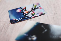 Fotografie - V modrom tóne - 3800114_