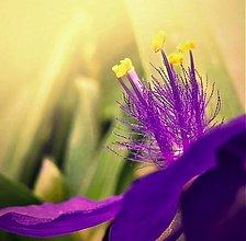 Fotografie - krásně rozkvetlé - 3814373_