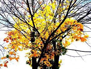 Fotografie - Jeseň - 3834133_
