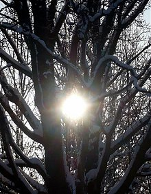 Fotografie - Slnko v strome - 3836299_