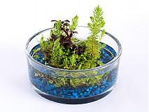 Dekorácie - Wabikusa v menšom skle - 3849658_