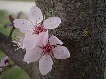 Fotografie - Jar sa na nás usmieva - 3853216_