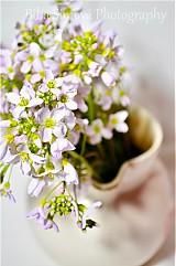 Fotografie - jarné kvety II Kašky - 3858232_