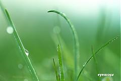 Fotografie - ...ranná sviežosť... - 3862918_