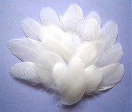 Iný materiál - Maličké pieročká biele, Mix- 10 ks - 3871588_