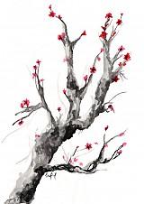 Obrazy - Sakura - 3880655_