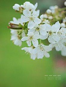 Fotografie - Morning beauty - 3914672_