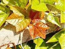 Fotografie - Jesenné farby použila jar I - 3953109_