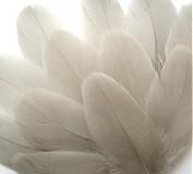 Suroviny - 5- Maličké pieročká, šedé- nefarbené, Mix- 10 ks - 3985661_