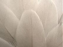 Suroviny - 5- Maličké pieročká, šedé- nefarbené, Mix- 10 ks - 3985662_