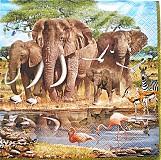 - S024 Servítky - safari1 - 4006713_