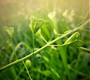 ♥ v trávě