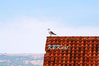 Fotografie - Namiesto kohúta - 4046128_