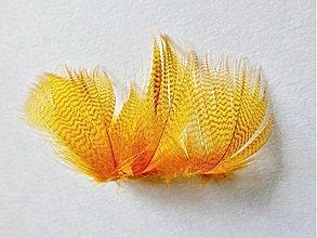 Suroviny - Káčer divý - oranžový farbený 4 ks - 4043334_