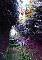 Fotografie - AKCIA!!!! Garden poetry.. - 4050019_