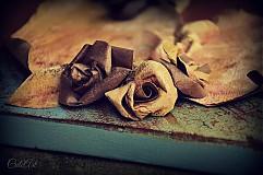 Obrazy - V každej ruži... - 4062071_