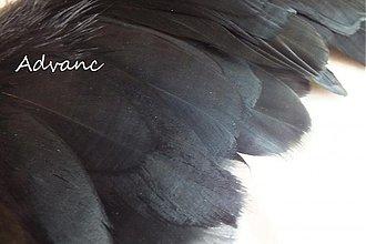 Suroviny - Kačacie čierne - 4075794_