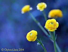 Fotografie - V záhrade - 4079461_