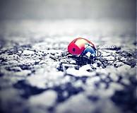 Fotografie - ladybird in red - 4098711_