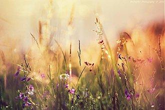 Obrazy - Celestial Summer III - 4107705_