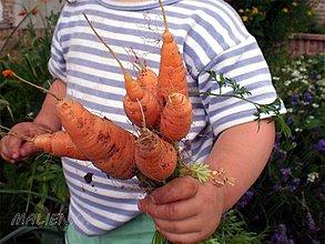 Fotografie - Prines mi zo záhrady mrkvičku - 4168982_