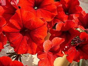 Fotografie - Láska v kvetoch ukrytá - 4196272_