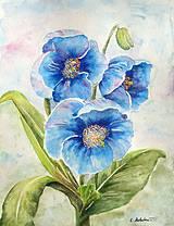 Obrazy - Modré himalájske maky - 4321238_