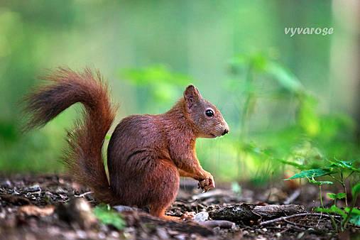 ...veverička...