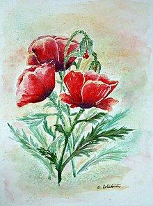 Obrazy - Maky (23 x 30) - 4361487_