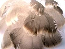 Suroviny - Landerské, prírodné- 50 ks - 4367654_