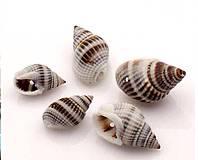Suroviny - Morské mušle - 4385909_
