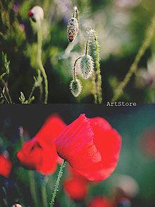 Fotografie - V makovom svete - 4452765_