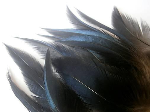 Dlhé čierne veľký péro