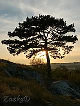 Fotografie - * strom * - 4490181_