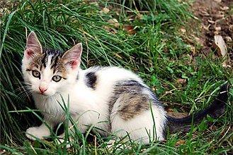 Fotografie - Kocúrik s očnou linkou - 4516667_