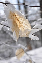 Fotografie - Zimný spánok - 4529570_