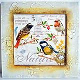 Obrázky - Vtáčiky - 4537251_