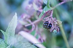 Fotografie - blackBerry - 4636700_