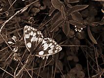 Fotografie - Volanie prírody  - 4640783_