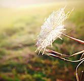 toulání podzimem