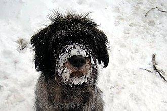 Fotografie - Ako chutí sneh? - 4785279_