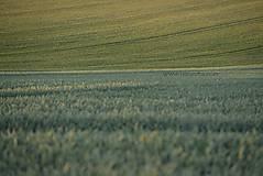 Fotografie - Pole neorane - 4792706_