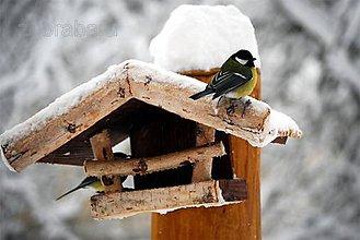 Fotografie - S plným bruškom - 4796508_