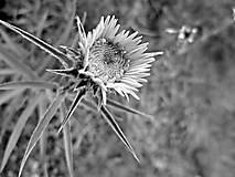 Fotografie - Lúčne kvety  - 4828443_