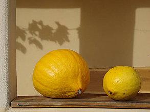 Fotografie - dve žlté kočky na zjedenie - 4903853_