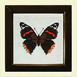 Obrazy - Motýľ 3 NA ZÁKAZKU - 4903912_